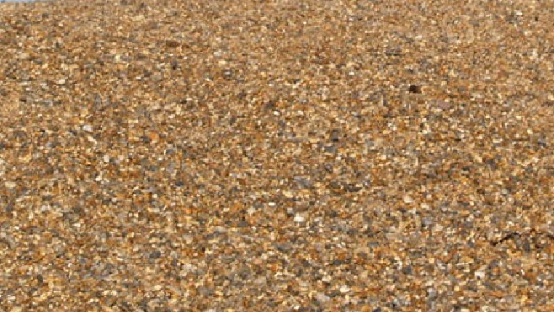 Gulls on the shingle banks at Salthouse beach Norfolk