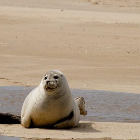 Seals at Blakney Point