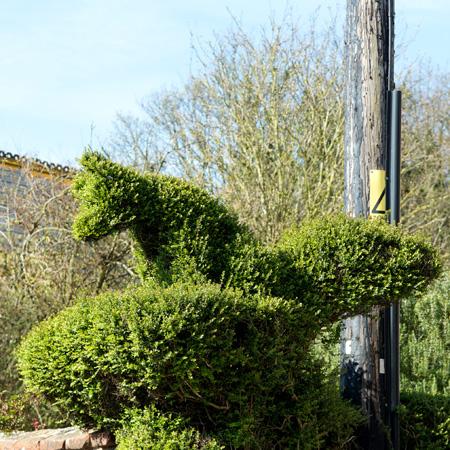 Fox Topiary Stiffkey